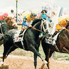 Forty Niner and Winning Colors in the 1988 Preakness Stakes<br /> Skip Dickstein Photo