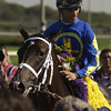 CAPTION: Ashado Distaff<br /> Date Oct. 30, 2004<br /> Breeders Cup day at Lone Star Park, October 2004, in Grande Prairie, Texas.<br /> DistaffOrigs1 image<br /> Photo by Anne M. Eberhardt