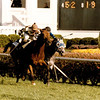 Miss Alleged wins the 1991 Breeders' Cup Turf (G1T).<br /> Skip Dickstein Photo