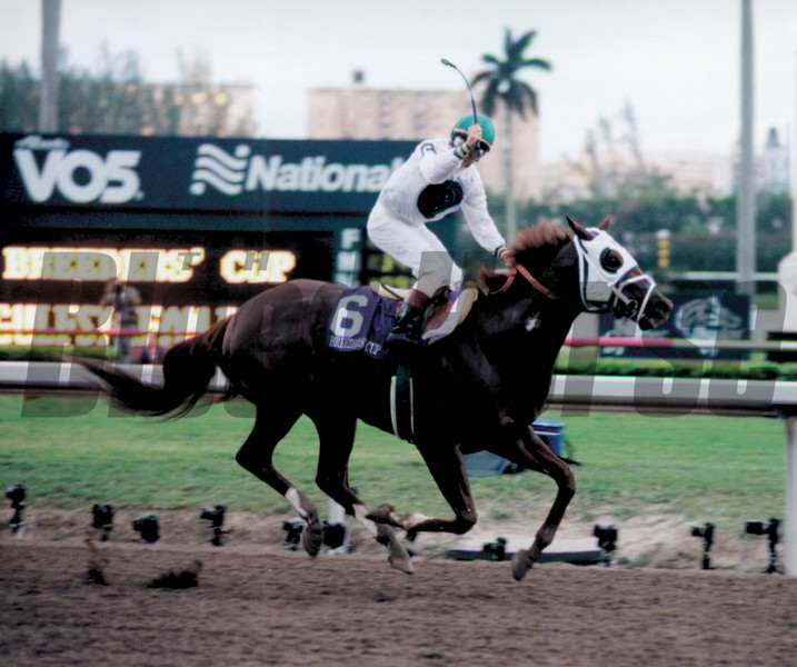Cat Thief wins the 1999 Breeder's Cup Classic at Gulfstream Park.<br /> Anne M. Eberhardt Photo