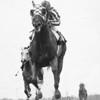 Secretariat and jockey Ron Turcotte wins the 1973 Gotham Stakes at Aqueduct.<br /> Photo by: Bob Coglianese