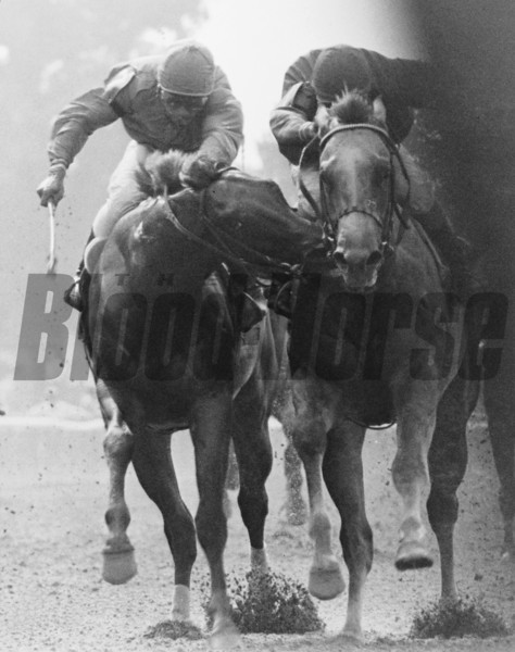 The Savage: 1980 Tremont Stakes with Great Prospector biting winner Golden Derby at Belmont Park.<br /> Photo by: Bob Coglianese