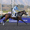 Caption: Life is Sweet wins the Breeders' Cup Ladies Classic<br /> Breeders' Cup Friday at Oak Tree/Santa Anita on Nov. 6, 2009, in Pasadena, California.<br /> Origs2  image077<br /> PHoto by Anne M. Eberhardt