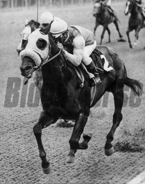 Key to the Mint wins the 1972 Withers Stakes at Aqueduct.<br /> Photo by: Bob Coglianese