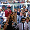 Oh So Sharp<br /> Sir Henry Cecil<br /> Trevor Jones Photo