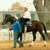 Sunshine Forever at the Breeders' Cup.<br /> Anne M. Eberhardt Photo
