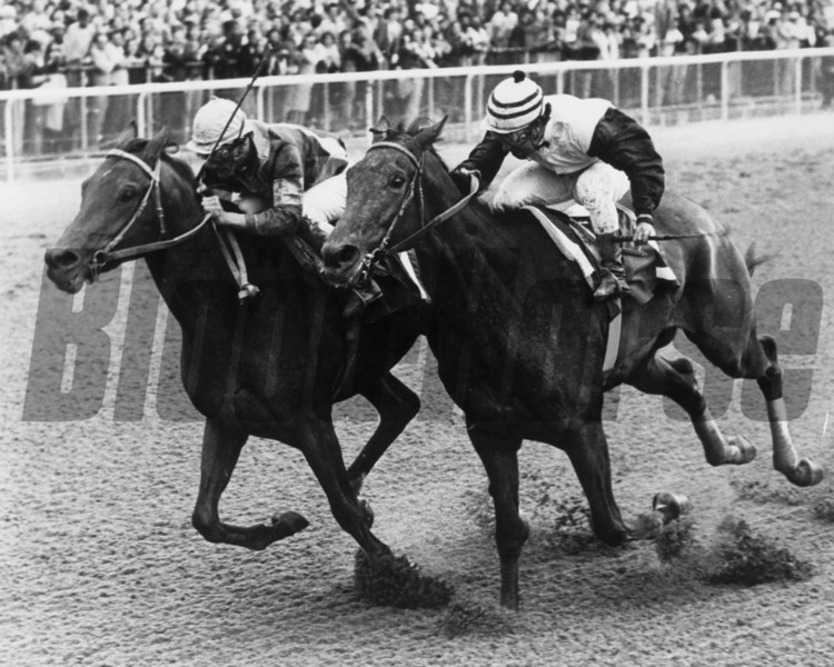 Wajima defeats Forego in the 1975 Marlboro Cup at Belmont Park<br /> Photo by: Bob Coglianese