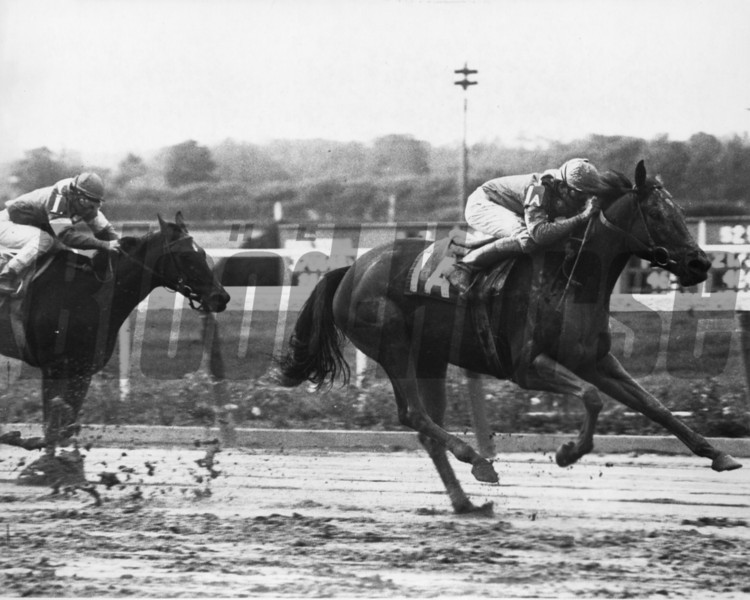 Waya wins the 1979 Beldame at Belmont Park<br /> Photo by: Bob Coglianese