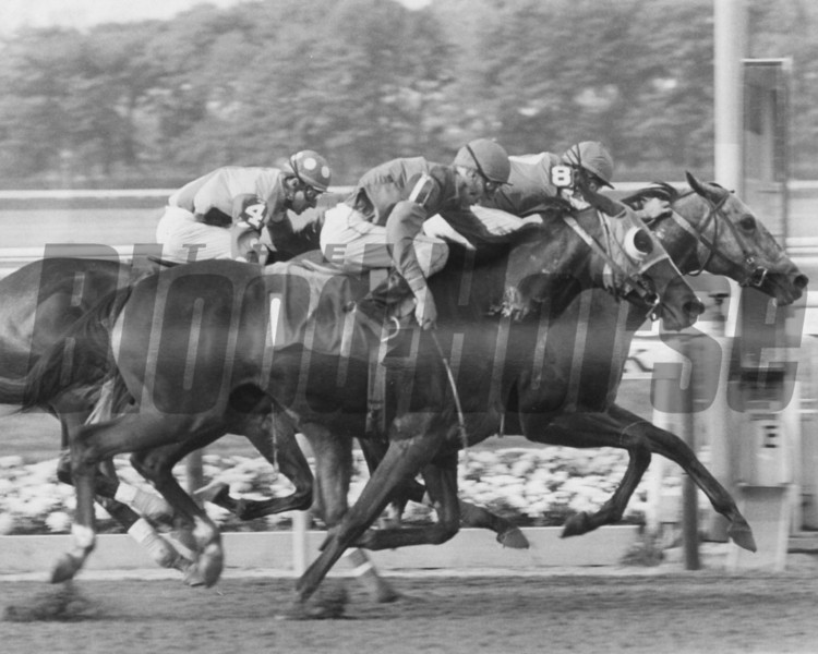 What A Summer beating Crab Grass and Harvest Girl in the 1977 Maskette Handicap at Belmont Park.<br /> Photo by Bob Coglianese
