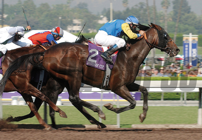 Pleasantly Perfect wins the 2005 Breeders' Cup Classic.<br /> Dave Harmon Photo