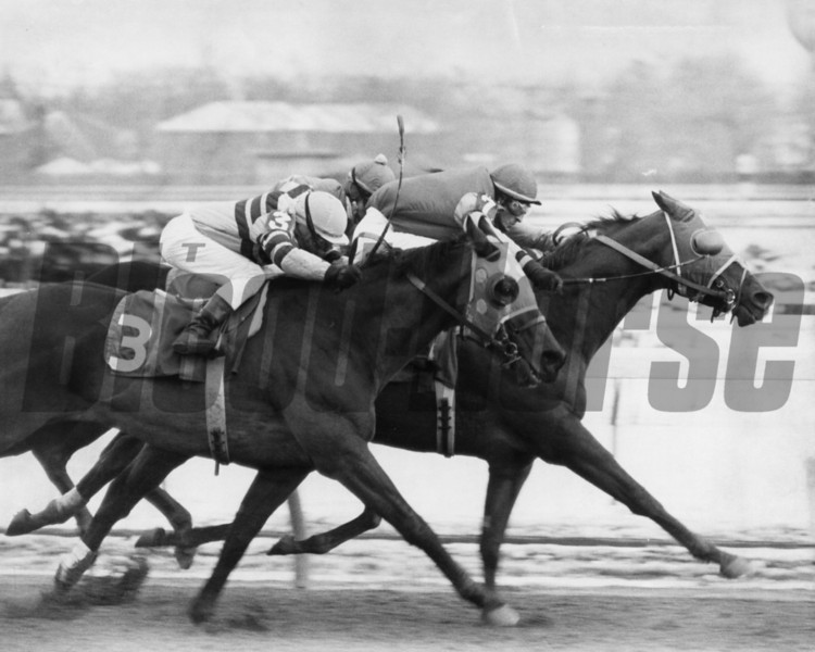 Whatsyourpleasure on the rail at Aqueduct Park in 1977<br /> Photo by Bob Coglianese