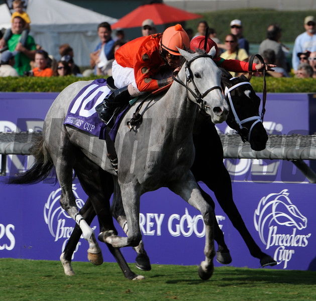 Photo by Skip Dickstein - Tapitsfly with jockey Robby Albarado in the irons with the Breeders' Cup Juvenile Fillies Turf at Santa Anita November 6, 2009.