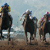 Pleasantly Perfect wins the 2003 Breeders' Cup Classic<br /> Skip Dickstein