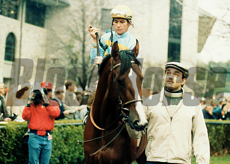 Unbridled in the paddock before the 1990 Blue Grass Stakes<br /> Anne M. Eberhardt Photo