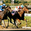 Safely Kept at the Breeders' Cup<br /> Skip Dickstein