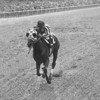Secretariat winning the 1973 Belmont Stakes.<br /> Coglianese Photos