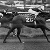 Weekend Surprise won the Schuylerville Stakes in 1982 with Jorge Velasquez up. <br /> Photo by: Bob Coglianese