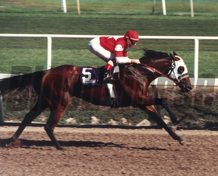Sacahuista wins the Breeders' Cup Distaff (gr. 1) on November 21, 1987. <br /> Photo by: Anne M. Eberhardt