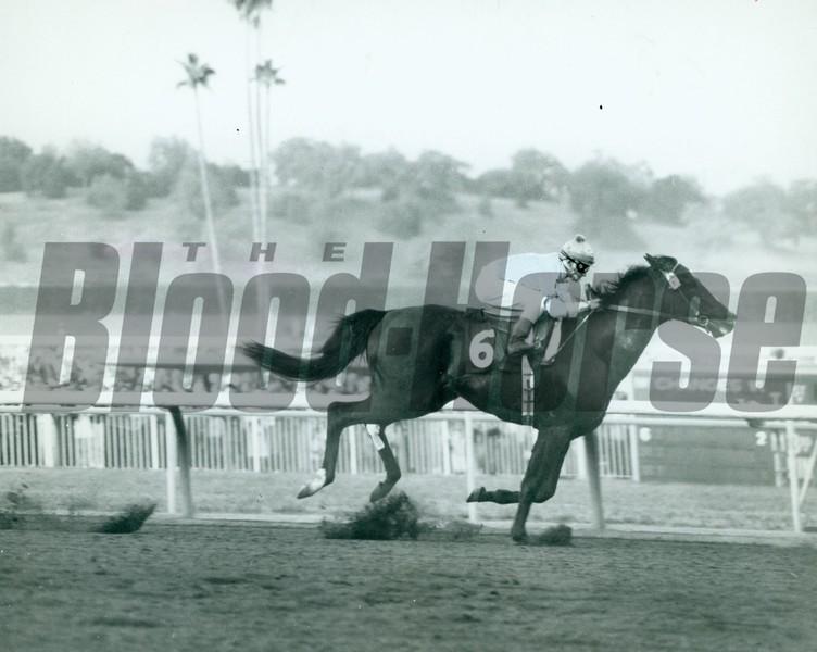 Native Diver wins the San Carlos Handicap with jockey Jerry Lambert up at Santa Anita Park on January 7, 1967.