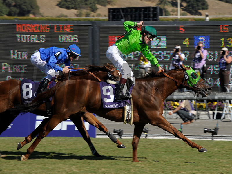 Desert Code with Richard Migliore wins the Breeders' Cup Turf Sprint  on October 25, 2008, at Santa Anita in Arcadia, California.<br /> Photo by Anne M. Eberhardt