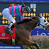 Chamberlain Bridge with Jamie Theriot wins the Turf Sprint on Nov. 6, 2010. PHoto by Anne M. Eberhardt