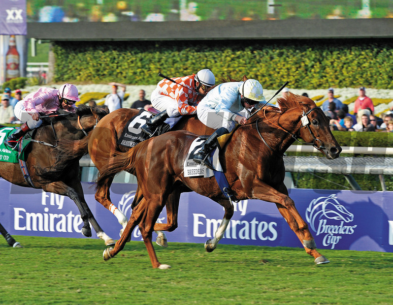 Caption: Conduit wins the Emirates Airline Breeders' Cup Turf.<br /> Breeders' Cup Saturda at Oak Tree/Santa Anita on Nov. 7, 2009, in Pasadena, California.<br /> Origs2  image216<br /> PHoto by Anne M. Eberhardt