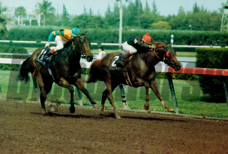 Dancing Spree wins the 1989 Breeders' Cup Sprint<br /> Skip Dickstein
