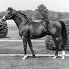Northern Dancer in 1983