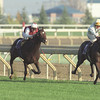 Breeders Cup Turf, Woodbine, Toronto 96.<br /> Pilsudski and Walter Swinburn attack Singspiel on the rails with Swain beaten  (centre) and Shantou (left) and Windsharp,<br /> <br /> <br /> © Trevor Jones