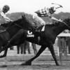 Summing and Jockey George Martins winning the 1981 Belmont Stakes<br /> NYRA Photo