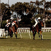 Miesque wins the 1987 Breeders' Cup Mile<br /> Skip Dickstein Photo
