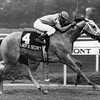Lady's Secret wins the Grade I Beldame Stakes at Belmont Park on October 13, 1985.<br /> Photo by: Bob Coglianese