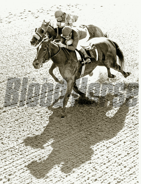 Ta Wee wins the Fall Highweight at Belmont. 1970