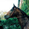 Hernando in the Breeders' Cup Turf,<br /> Photo by Anne M. Eberhardt
