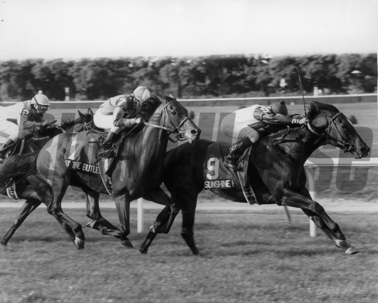 Sunshine Forever wins the Man O' War Stakes. <br /> Bob Coglianese/NYRA photo