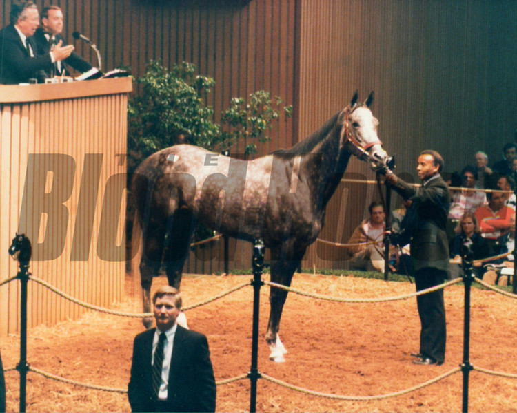 Winning Colors at the 1989 Keeneland November Sale<br /> Photo by: Anne M. Eberhardt