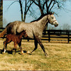 Winning Colors with first foal photo by Anne Eberhardt