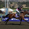 Albertus Maximus with Garrett Gomez wins the Breeders' Cup Dirt Mile  on October 25, 2008, at Santa Anita in Arcadia, California.<br /> Photo by Anne M. Eberhardt