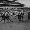 Triple Bend wins the 33rd running of the Vosburgh Handicap at Aqueduct on October 21, 1972. <br /> Photo by: Bob Coglianese