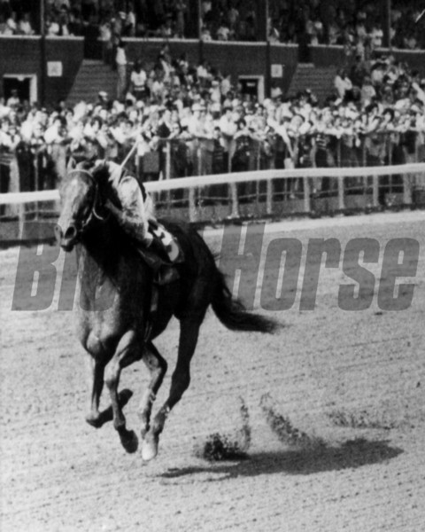 White Star Line with Jeffrey Fells up beats Silken Delight in the 1978 Test Stakes at Saratoga August 2<br /> Photo by Bob Coglianese