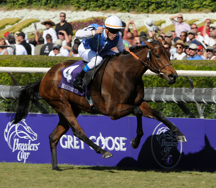 Goldikova wins the Breeders' Cup  Mile at Santa Anita October 25, 2008.  Photo by Skip Dickstein