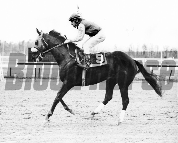 Halo with Vincent Bracciale in the Voters Handicap at Laurel Park.<br /> Blood-Horse Library