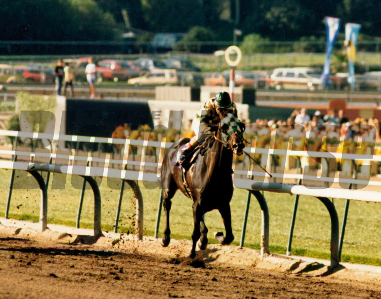 Skywalker in the Breeders' Cup Classic.<br /> Skip Dickstein Photo