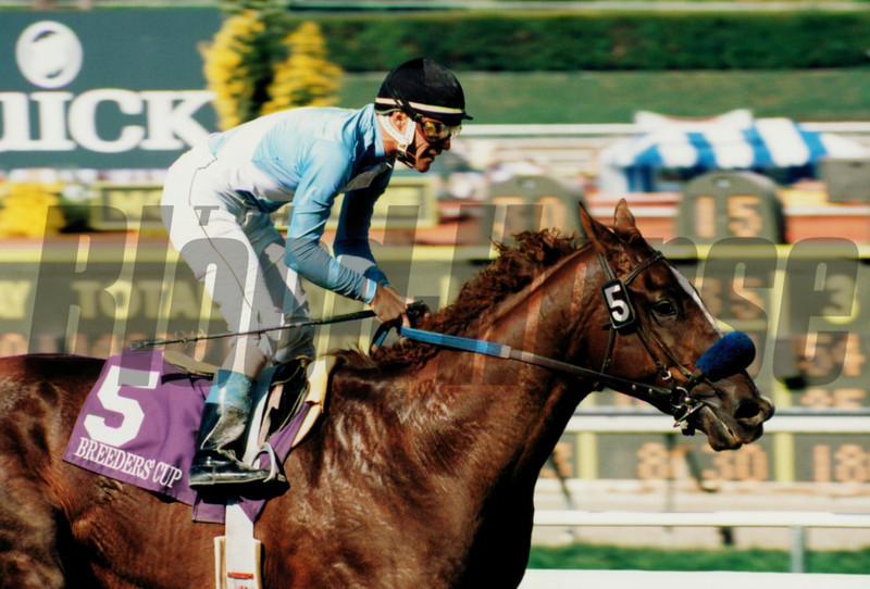 Batch 45, horses beginning with B