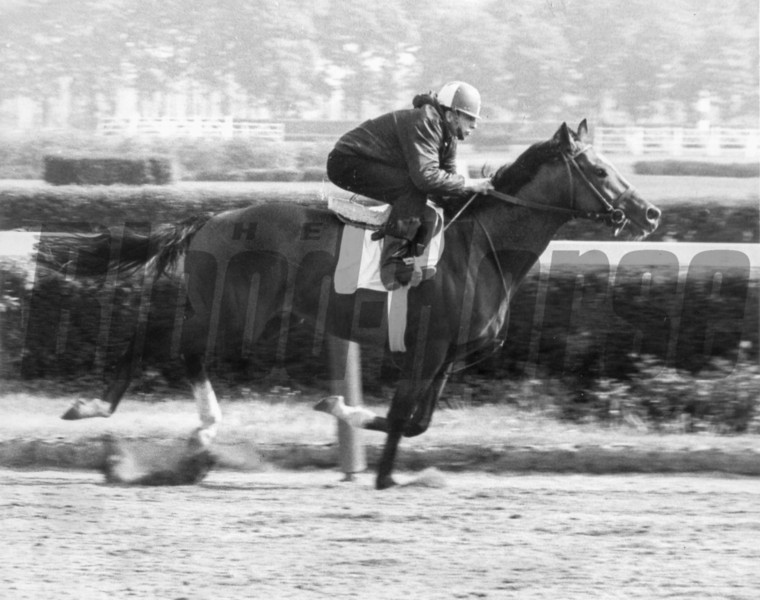 Northern Dancer prepares for the 1964 Belmont Stakes.<br /> Coglianese Photos