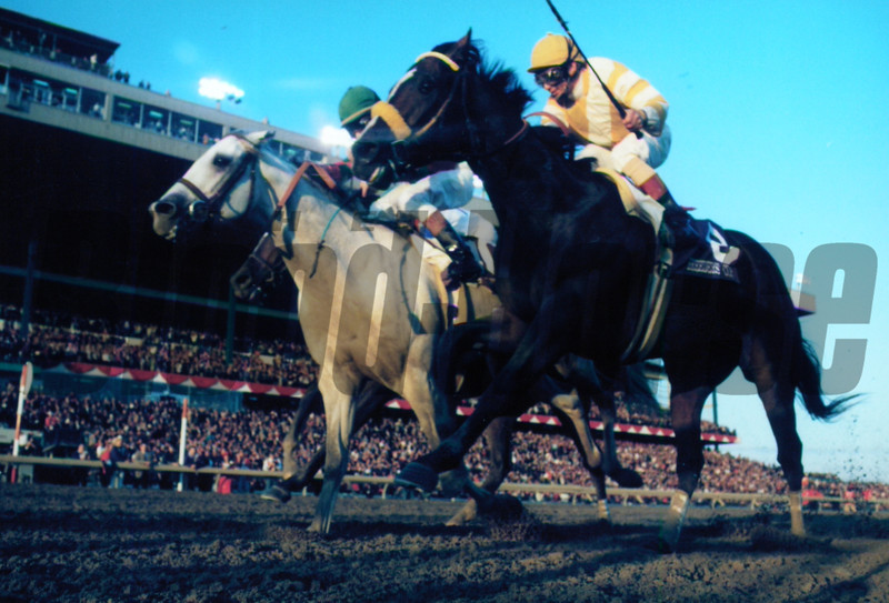 Alphabet Soup (center) wins the 1996 Breeders' Cup over Louis Quatorze (right) and Cigar.