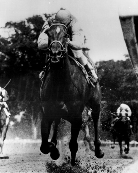 Winning Tip with George Martens up winning at Saratoga August 10, 1978<br /> Photo by Bob Coglianese