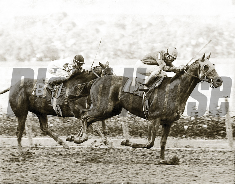Alydar gets the best of Affirmed in the 1977 Champagne<br /> Photo by: Bob Coglianese