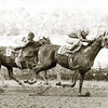 Alydar gets the best of Affirmed in the 1977 Champagne<br /> Phoot by: Bob Coglianese