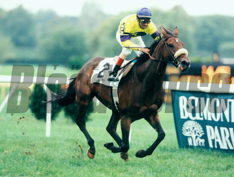 Turk Passer wins the 1995 Turf Classic at Belmont Park.<br /> Skip Dickstein Photo